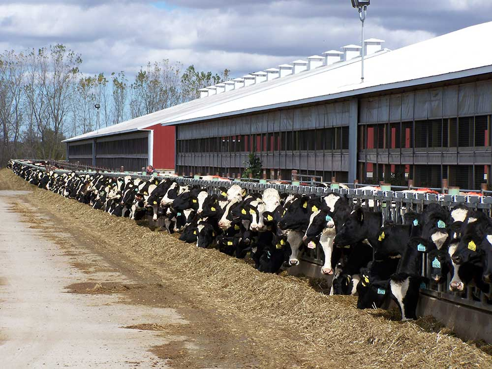 Blews Farm