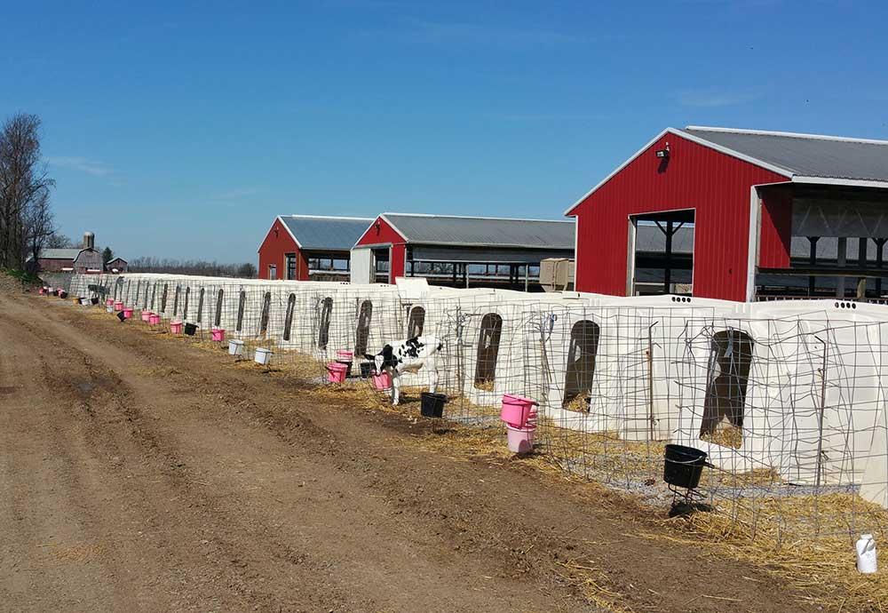 Bliss Calf Farm