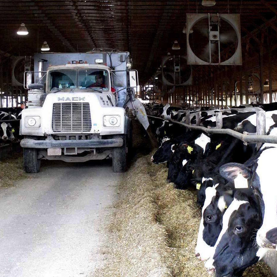 Comfy Cows